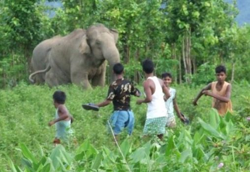 An elephant in a field charging at a group of boys