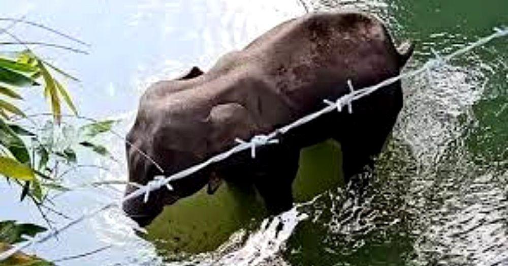 elephant death in kerala
