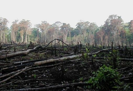 cutting of forests deforestation
