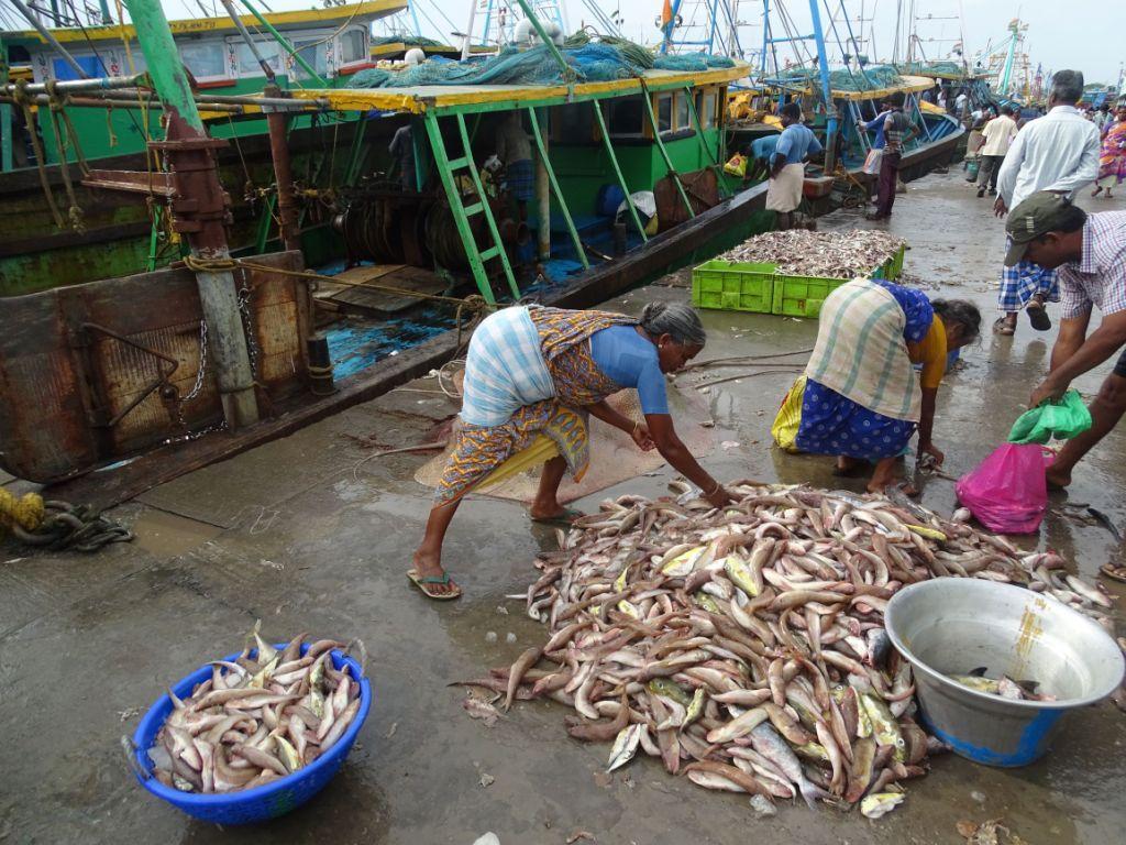 Woman separating fish at a fishery
