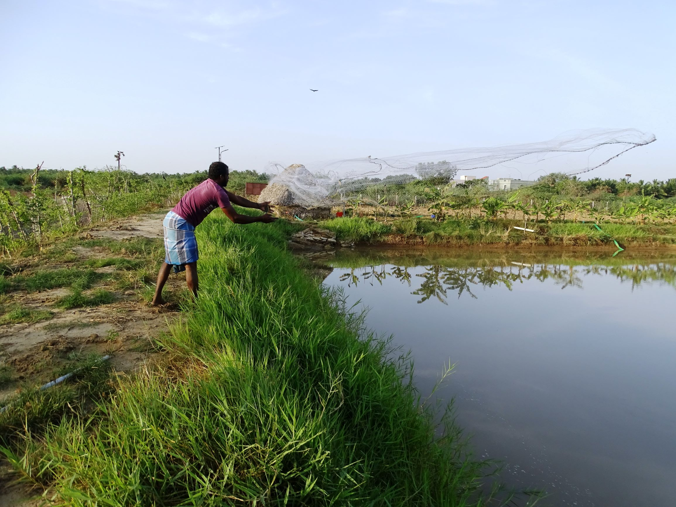 A combined fish and farming system by M.S. Swaminathan Research Foundation.