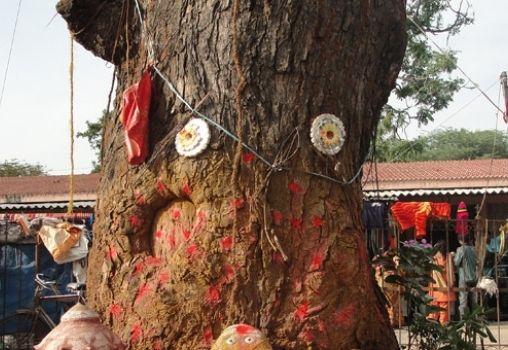 tree temple religion