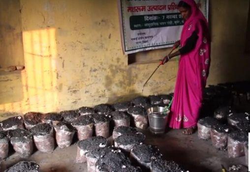women farmers growing mushrooms
