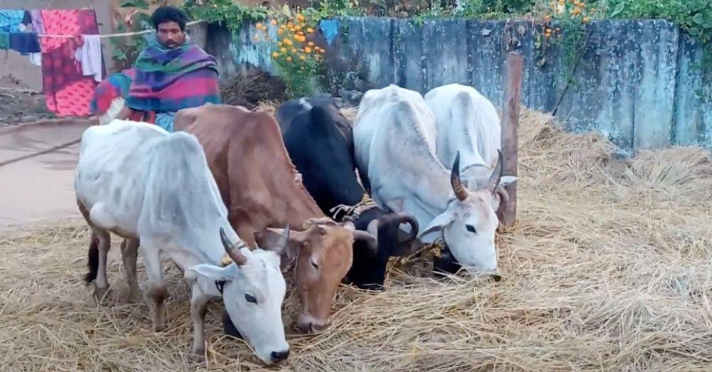 process of agriculture in chhattisgarh