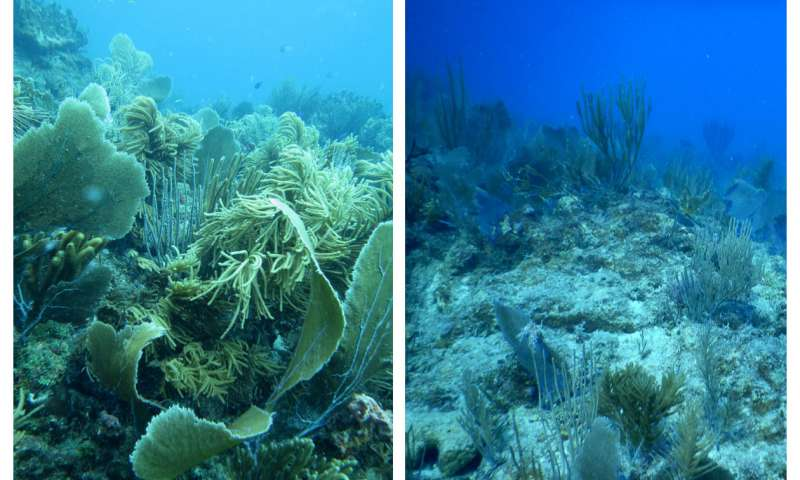 Damage caused to corals years after the cyclone in the Great Barrier Reef of Australia.