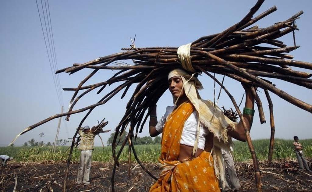 sugarcane fields women