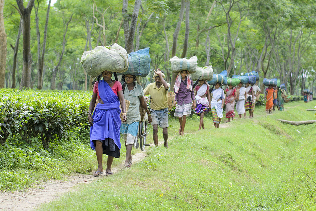 assams-tea-plantation-workers-why-are-they-in-the-news