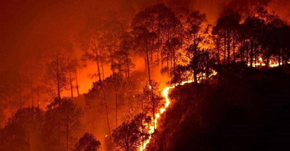 Bandipur Forest Fire Karnataka