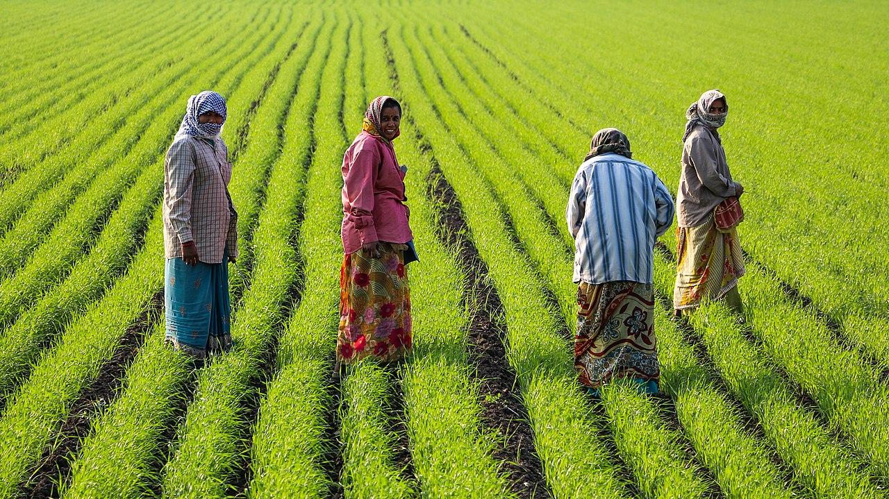 Women working on farm