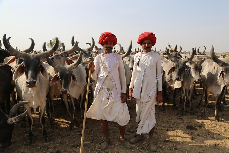 Raikas Rajasthan