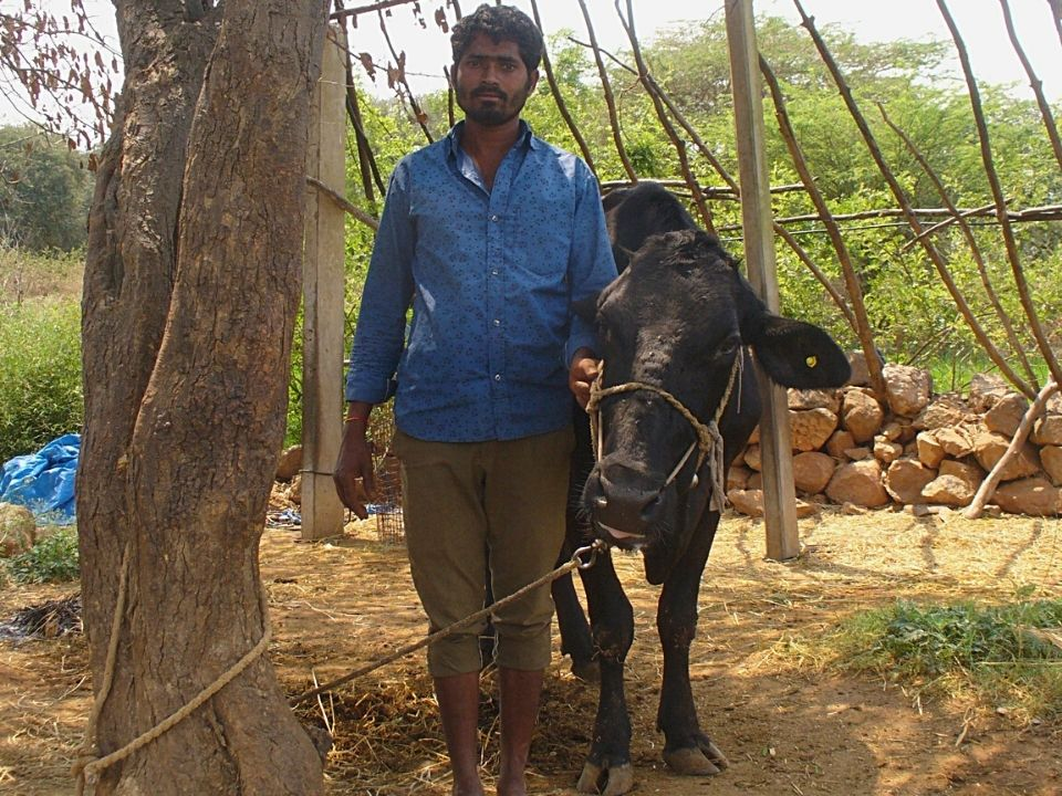 Framer with his cow