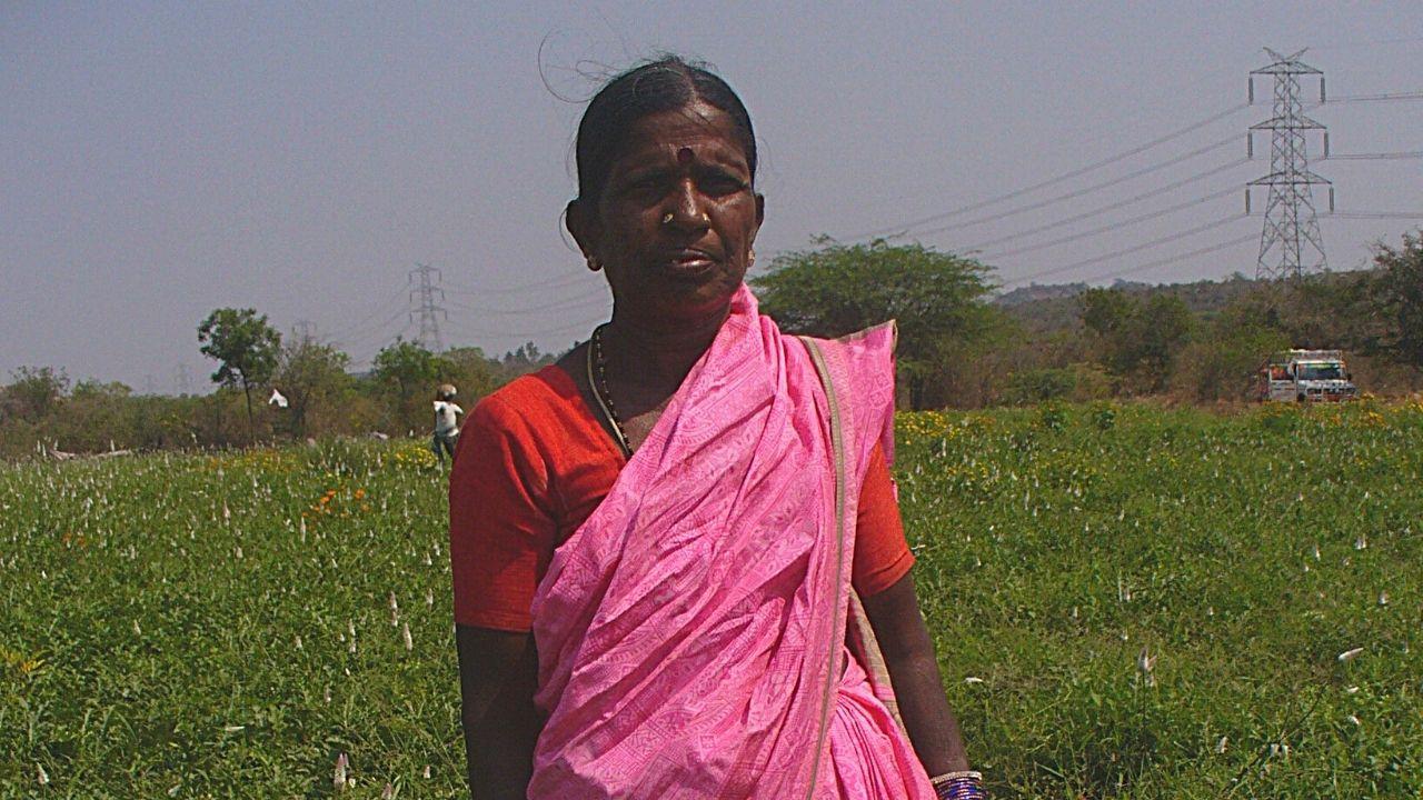Woman farmer in field