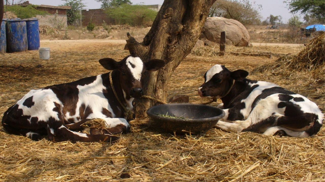 Small Dairy Farm