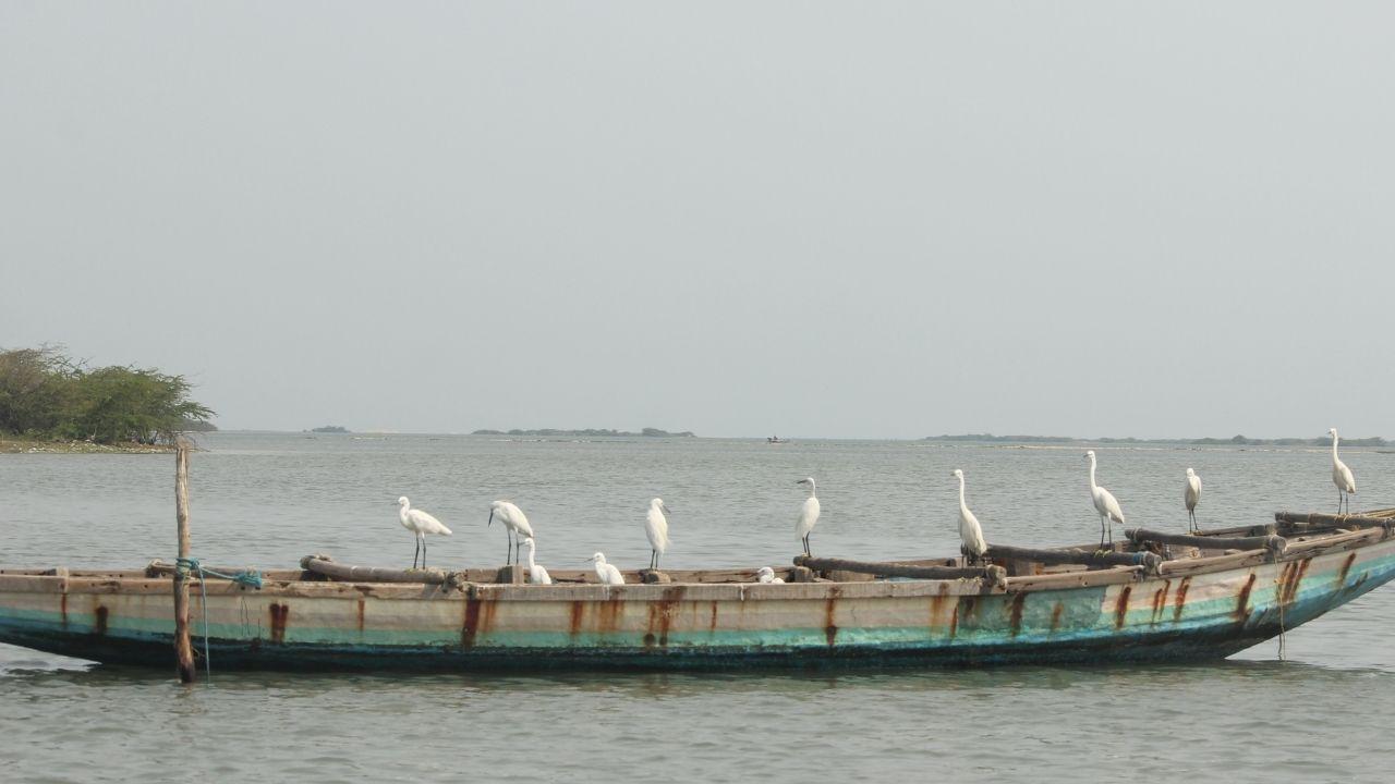 Boat River Birds