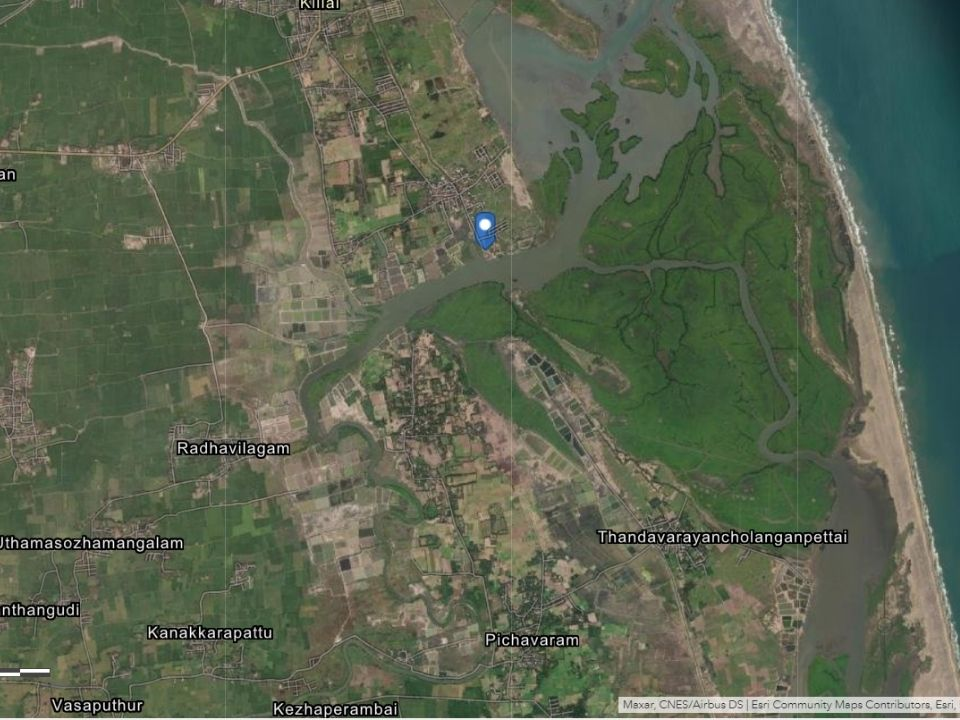 Pichavaram Forests on Google Maps
