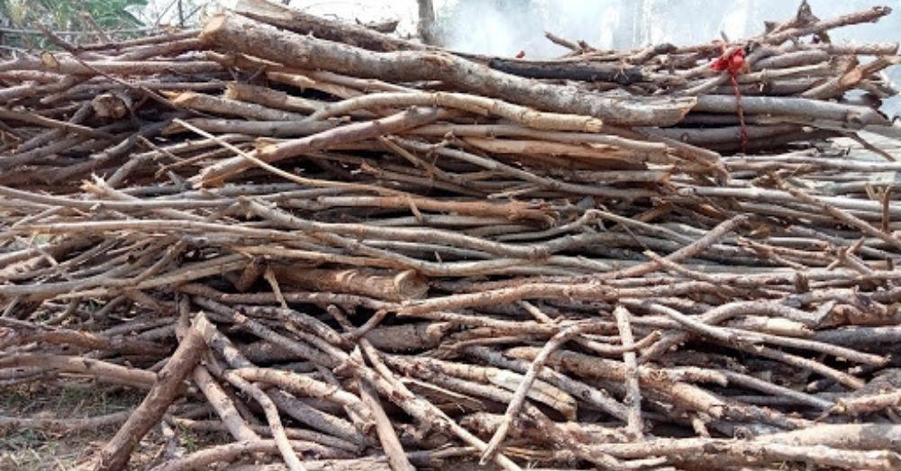 सर्दी से बचाव हेतु लकड़ियों को इकट्ठा करके, धूप में सुखाना
