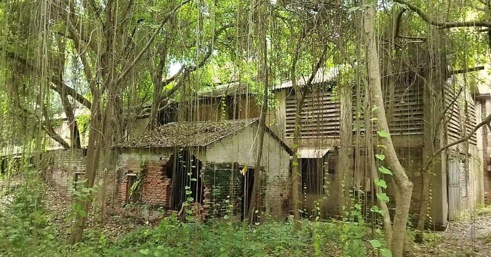 जंगल का स्वरूप ले चुकी वीरान चीनी मिल